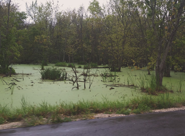 Swamp where the body of the Jay Road Jogger was lost